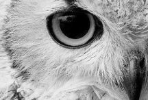 I love Owls / All things owls! I love them, so cute, so wise, my spirit animal ...