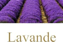 """Lavender❀Lavanda❀Lavendel❀ / """"There are always flowers for those that want to see them.""""       Henri Matisse / by Patricia Martin"""