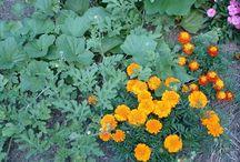 1 Az öngyógyító kiskert / Kertészkedés biológiai módszerekkel