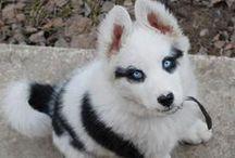 Zwierzęta - materiał na pupila
