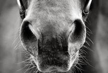 AnimalsPhotography / ~ Amazing Animal Photography ~