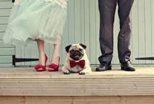 Animals in Wedding
