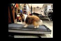 move / sports, gym, health