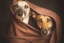 Beautiful pet friends!❤️