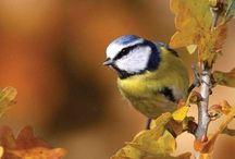 Animals - Birds / Birds of our gardens.
