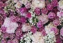Blomster / Jeg elsker, elsker, elsker blomster