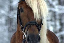 Hevoseeet