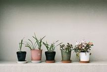 Home | Gardening / indoor garden, plants, cactus, pots, green, flora, grow, planters, home gardening