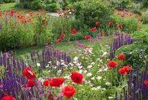 Gardening / Gardening, Tips, garden design pictures and more.....