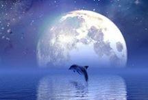 Mis delfines / Animales hermosos y inteligentes