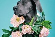 - Animals & Flowers - / What's not to love with this winning combination?!