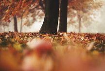 Autumn:)))