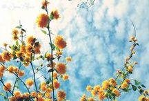 - Outside - / Flowers Flowers Flowers & Other Outside Things