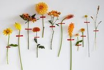 - Electric Daisy Flowers - / What It Says On The Tin