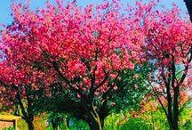 Spring/Summer! / Summer, spring, seasons, pretty, flowers, lambs, pink, blossom