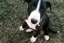 Puppies / Foster Care