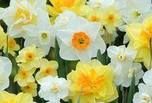 flowers everywhere / flores, jardim, plantas
