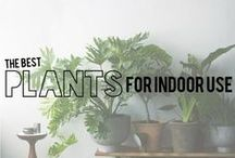Bring The Green Indoors / Bring the beauty of your plants indoors and enjoy them inside your house as well as out!
