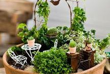 Fairy Gardens / Fairy Gardens are a super fun way to create a whimsical and playful arrangement for your garden. Everyone from young children to the young at heart will love this craft.
