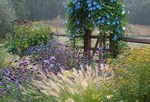 Hayefield Favorites / Garden images from Hayefield.com