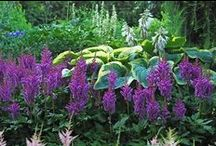 Astilbe Combinations / Plant partnerships that include astilbes