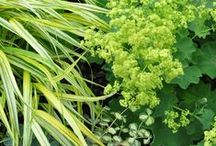Alchemilla Combinations / Plant partnerships that include lady's mantles