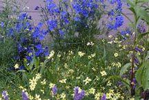Delphinium Combinations / Plant partnerships that include delphiniums