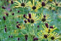 Sanguisorba Combinations / Plant partnerships that include burnets