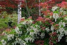 Plants: Woodies in Combinations / Plant partnerships that include shrubs, trees, or woody vines