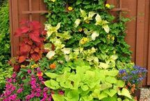 Plants: Container Combinations / Plant partnerships for pots, planters, window boxes, and other containers
