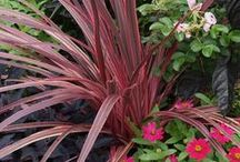 Color: Pink Combinations / Plant partnerships that include pink flowers or foliage