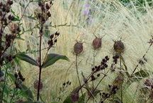 Plants: Seedheads in Combinations / Plant partnerships that include beautiful berries or interesting seedheads