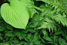 Color: Green Combinations / Plant partnerships that are primarily based on tints and shades of green