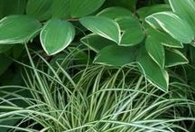 Color: Variegated Plant Combinations / Plant partnerships that include variegated foliage