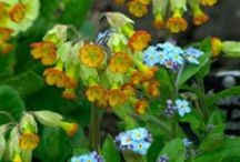 Seasons: Spring Combinations / Plant partnerships featuring early-season flowers and foliage