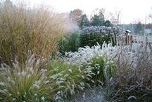 Plants: Ornamental Grasses in Combinations / Plant partnerships that include true grasses, sedges, rushes, or bamboo