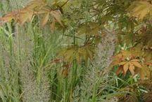 Color: Harmonious Combinations / Plant partnerships based on similar colors