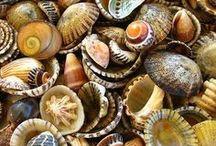 Shell pics