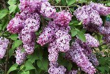 Fleur & Jardinage