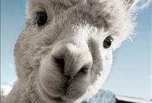 Animal Farm / All about farm animals.