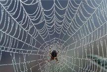 Spider Webs / Nature