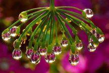 Dew Drops / Dew Drops