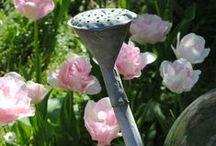 Passions pour les Jardins