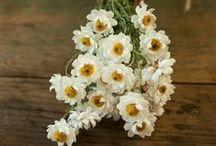 Passions pour les bouquets de fleurs / Rouge vif ou blanche, la rose est LA fleur par excellence. Beauté du jardin et protégée des jardiniers, elle irradie de toute sa splendeur. Méfiez-vous néanmoins de ses épines !