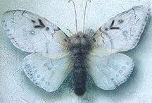 Passion pour les papillons...Buttefly