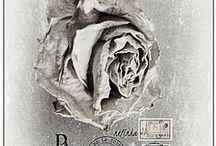 Passion pour les Roses