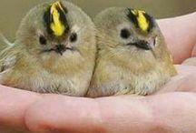 canım güzel kuşlar........