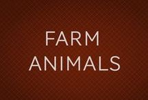 ANIMALES DE GRANJA. FARM ANIMALS / Animales de granja, animales faltos de libertad.