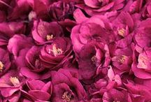 개화주의보 / 꽃의 개화시기에 맞춰, 꽃에 대한 정보와 꽃말, 전설, 시, 음악 등을 소개하...렸는데, 편리하지 않아서... 페이스북으로 링크를 걸었습니다. ※링크를 ←클릭하시면 자세한 개화주의보를 볼 수 있습니다. :)