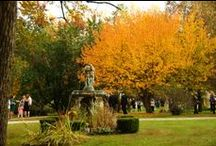 Fall at Jasmine Plantation  / Getting married in September, October or November? Check out our grounds!